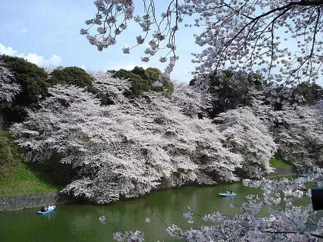 Японская вишня